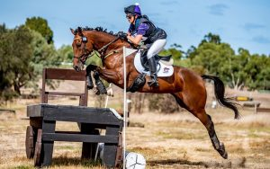 Established Eventer and Show Jumper thumbnail