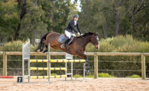 Talented Dressage Mount Perfect for Adult Rider thumbnail