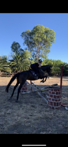 Sweet Five-Year-Old Gelding Looking For New Home thumbnail