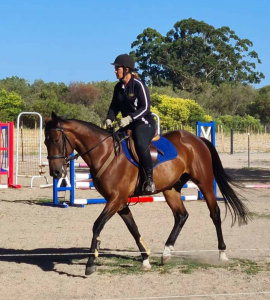 Handsome Gelding Ready For Competition Home thumbnail
