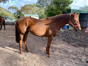 Athletic Green Mare thumbnail