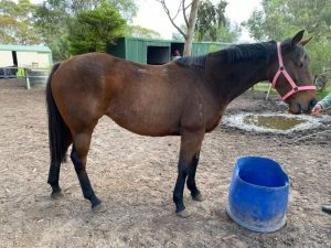 Broodmare or Clean Slate Project – You Choose! thumbnail