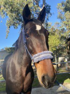 Social Companion/Pleasure Trail Riding Horse thumbnail